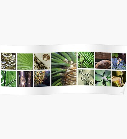 Tropical Images Poster