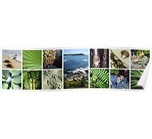 Collage of tropical images Poster