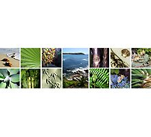 Collage of tropical images Photographic Print
