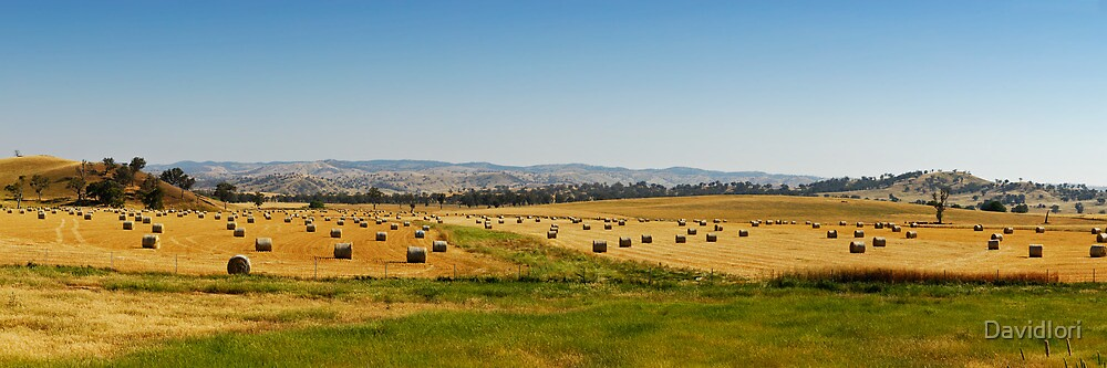 Country Side Hay Bales Panorama 01 by DavidIori
