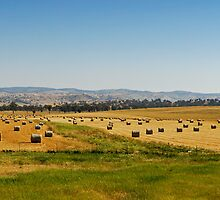 Country Side Hay Bales Panorama 01 by DavidIori