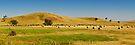 Country Side Hay Bales Panorama 02 by DavidIori