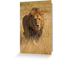 Mature male lion Greeting Card