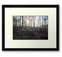 Abbotts Wood on a frosty morning Framed Print