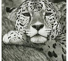 Leopard by Tony Sturtevant