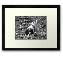 Master Ruin Climber Framed Print