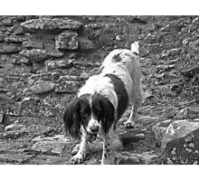 Master Ruin Climber Photographic Print