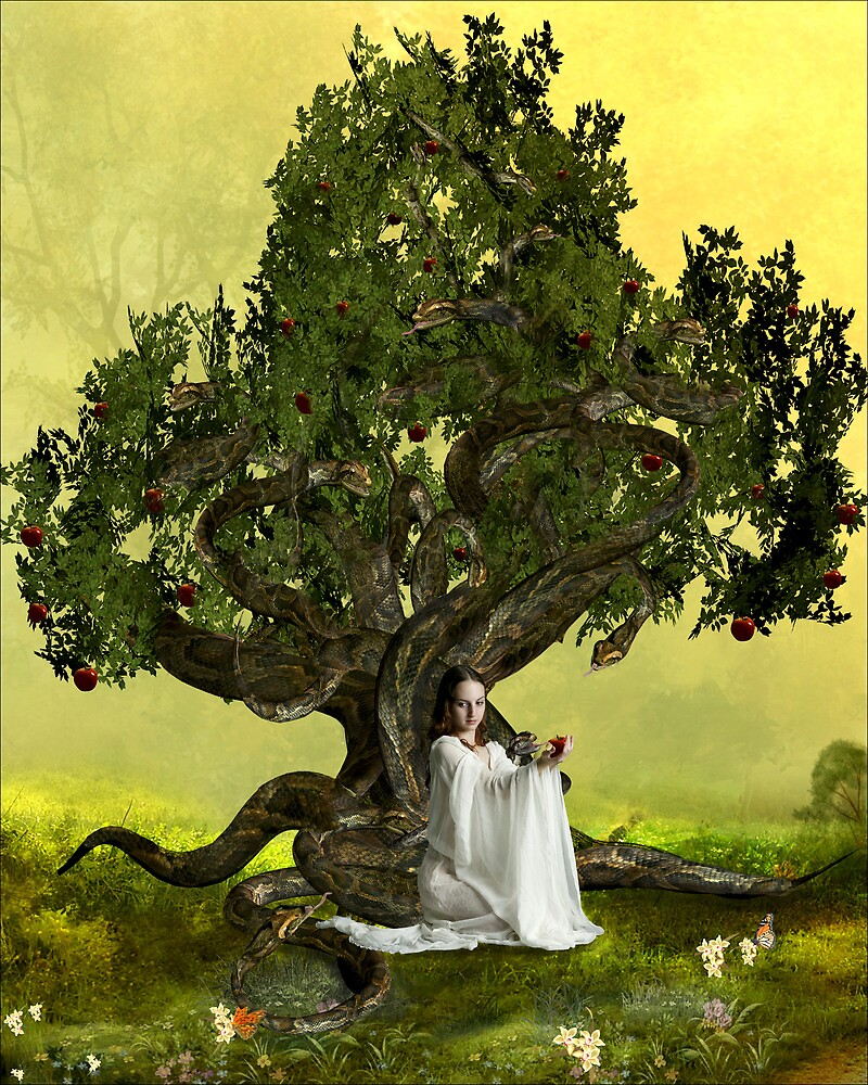 The Serpent Tree by Anna Shaw