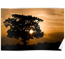 Safari Sunset Poster