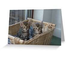 kittens in a basket Greeting Card