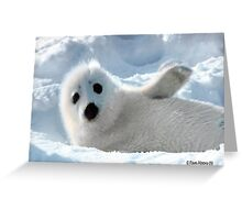 a Cute Seal Pup Greeting Card
