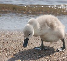 Swan Baby by pulsdesign