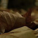 Then leaf subsides to leaf by Ninit K