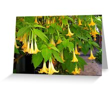 Lovely yellow flowers Greeting Card
