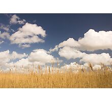REEDS AND SKY Photographic Print