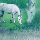 White horse 2 by steppeland
