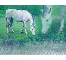 White horse 2 Photographic Print