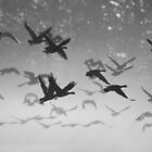 Geese in flight - b&w silhouette by Allan  Erickson