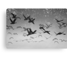 Geese in flight - b&w silhouette Canvas Print