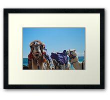 Camel Curiosity Framed Print