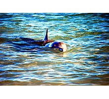 The Dolphin  Photographic Print