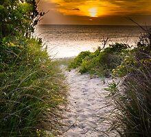 Beach Sunset by dc42291