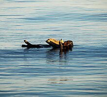 Drift wood  in the South China Sea by brevans