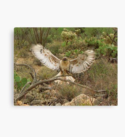 Ferruginous Hawk ~ Kachina Dreams Canvas Print