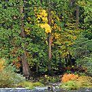 """Merced River Fall Colors"" by Lynn Bawden"
