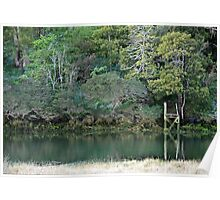 Stoney Creek - Gravelly Beach, Tasmania Poster