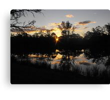 Renmarks sun piercing through the river red gums. Canvas Print