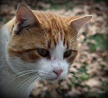 Tom Cattin by Tonye Banks