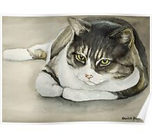 Tubby Tabby Cat Watercolor Painting Poster