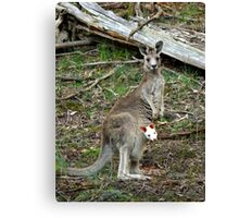Albino Joey Canvas Print