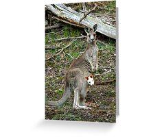 Albino Joey Greeting Card