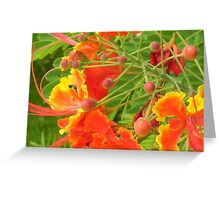 Red-Orange and Yellow Jamaican Flower Greeting Card