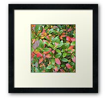 Autumn Bouquet - Rhododendron Framed Print