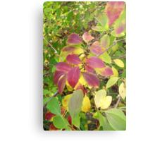 Autumn Bouquet - Forsythia Metal Print