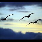Seagulls At Sunset by KardsRUs
