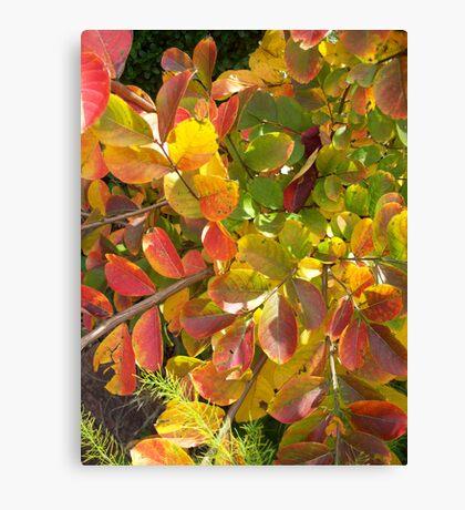 Autumn Bouquet - Crepe Myrtle Canvas Print