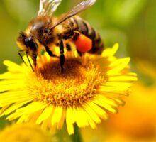 Bee & Wild Flower Sticker