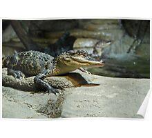 Crocs Poster