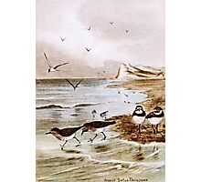 Common Terns on the Shore Photographic Print