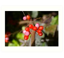 Red Berry Pink Art Print