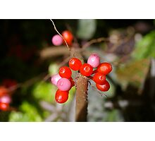 Red Berry Pink Photographic Print