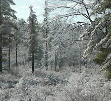 Ice Forest by William Sanford