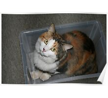 So I'm in a box. You're surprised? Poster