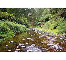 rainforest stream Photographic Print