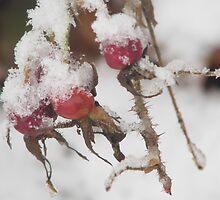 First snow by Heli_ Aarniranta©