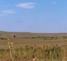 Kansas Prairie With No Little House by sandycarol